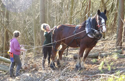 Rowan Working Horses - land management