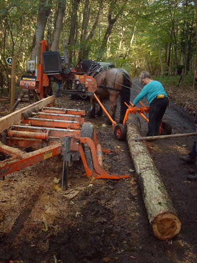 Rowan Working Horses - horse logging